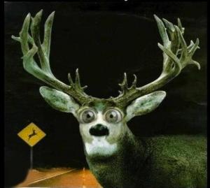 deer in headlights!